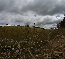 The central plains of Tasmania are known as Grasslands by Ron Co