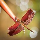 Red Winged Dragonfly by Dean Mullin