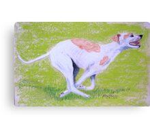 Greyhound running Canvas Print