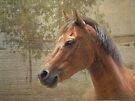 Horse Portrait by Eve Parry