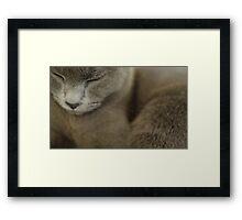 Grey Framed Print
