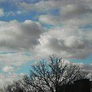 blue sky by sunflower dream