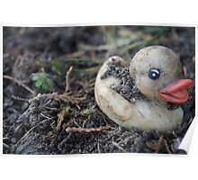 Pale Duck Poster