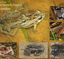 Eastern Froglet, Crinia signifera by peterstreet