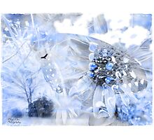 Touch of a blue Photographic Print