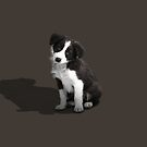 Border Collie Puppy - iPhone by Andrew Bret Wallis