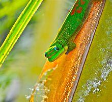 Lizard Look by bamorris