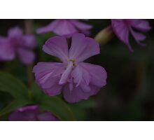 ID  Anyone know the name of this flower???? Photographic Print