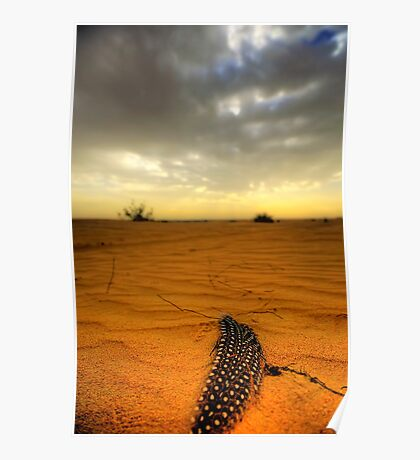 Desert Feather Poster