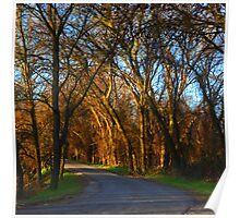 Northern California Anderson River Park Road Poster