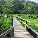 The Swamp Trail At Mason Neck Park by Bine