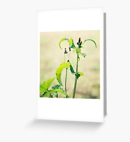 living simply. Greeting Card