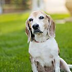Sittin' Silly by ppcpetphotos