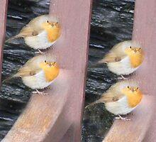 4 Sitting Robins by AwesomeDawson
