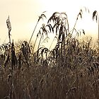 Wetland Reedbed by Anne Kingston