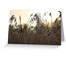 Wetland Reedbed Greeting Card