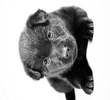 Sweet Puppy by Ann  Klein