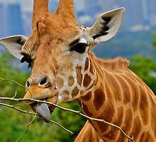 Giraffe Snacks / Refreshments ???. by Julie  White