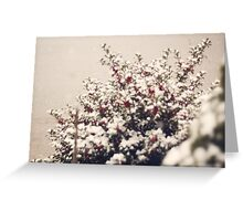 Snow and Holly  Greeting Card