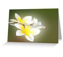 White Lady - frangapani flowers Greeting Card