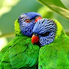 Rainbow Lorikeets by Paul Sparrow