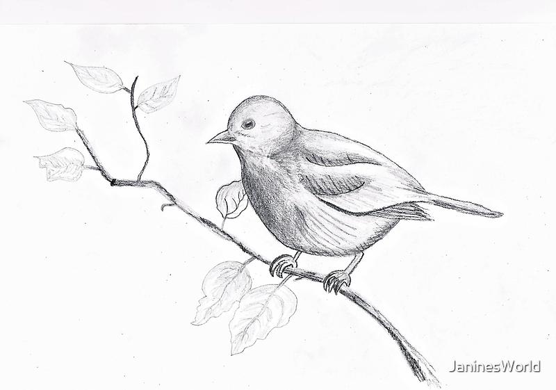 A Cute Little Robin by JaninesWorld