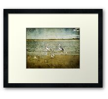 Born Free ~ Framed Print
