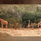 Giraffes ~ Carte Postale by steppeland
