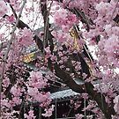 Kyoto in the springtime by Cahl Schroedl
