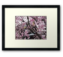 Kyoto in the springtime Framed Print