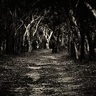 Into the bush we go... by Jason Ruth