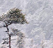 11.1.2012: Standing Alone in the Blizzard by Petri Volanen