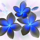 Frangipani Blue by Keith G. Hawley