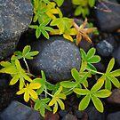 green wreath by lukasdf