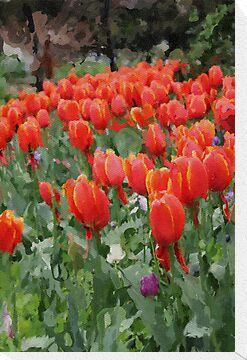 Tulip Garden by Rookwood Studio ©