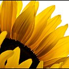 Big yellow sunflower by LincolnDispImgs