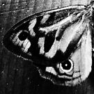 Butterfly Wing in Monochrome by Erica Corr