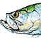 Tarpon Portrait Illustration - Tarpon Fishing Illustrated Picture by Mike Savlen
