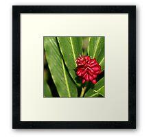 Red Burst Framed Print