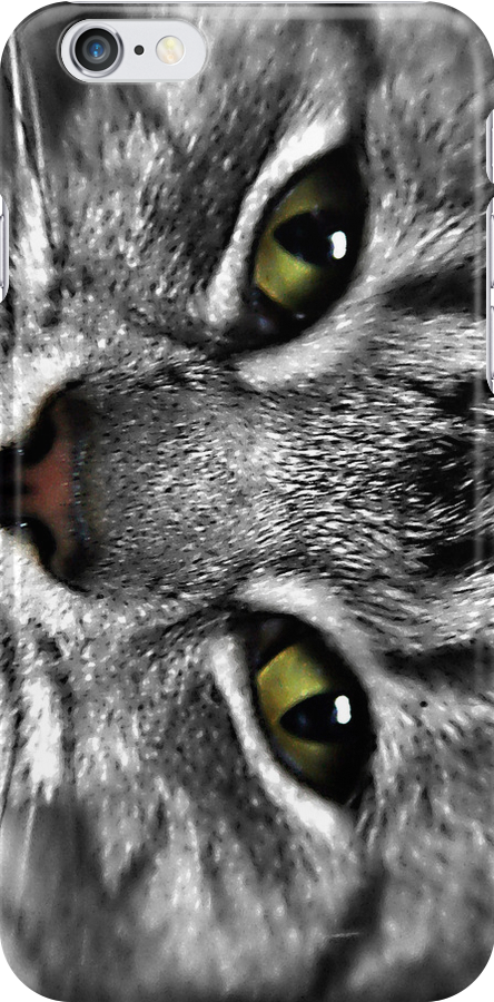 Cats eyes stare by LincolnDispImgs