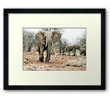 """The Matriarch"" - african elephant cow (Loxondonta africana) Framed Print"