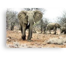 """The Matriarch"" - african elephant cow (Loxondonta africana) Canvas Print"