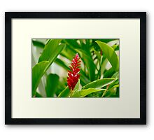 Tropical Red Framed Print