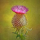 Spear thistle on gold by Margaret S Sweeny
