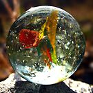 The Magic of a Simple Marble by Angie O'Connor