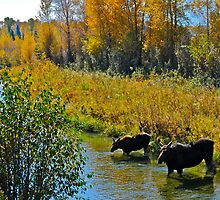 Mother daughter Moose by bamorris