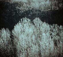Trees by Silvia Ganora