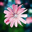 Pink Pastel Dragonfly by Doty