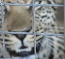 Captive by jaconm