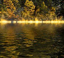 Morning In Gold by Carolyn  Fletcher